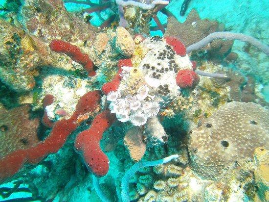 Salt Cay Divers: Xmas 2012
