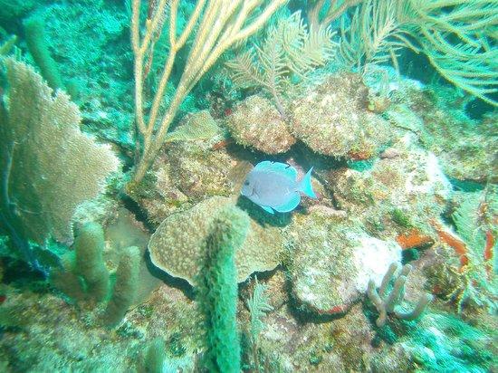 Salt Cay Divers: Xmas 2013