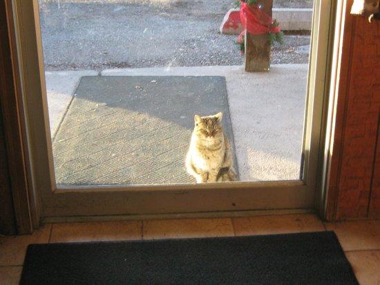 The Village Inn Motel & Restaurant : The Village Inn Restaurant Cat