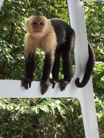 Hotel Riu Palace Costa Rica : a capuchin monkey comes aboard our boat to say hello