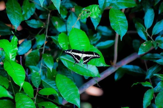 The Round House Hostel: One of the many butterflies that can be seen on the property