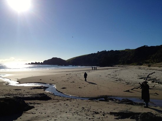 Tawharanui Regional Park: One of several beaches free to the public