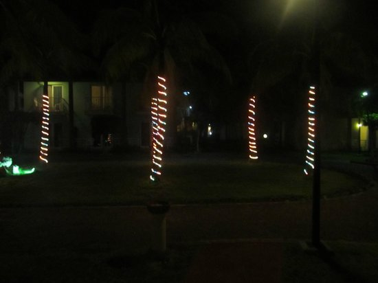 Be Live Experience Turquesa: Some of the palm tree's decorated for Christmas