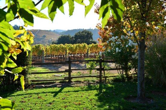 Dutcher Crossing Winery: Dutcher Crossing Vineyard October, 2013