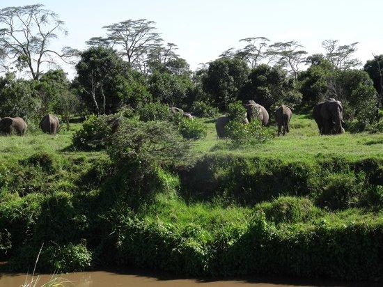 Ol Pejeta Bush Camp, Asilia Africa: View from Room