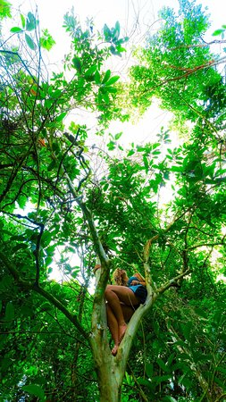The Round House Hostel: Traveller Climbs a Tree @ The Roundhouse