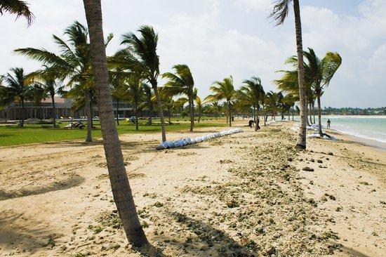 Amaya Beach: The beach