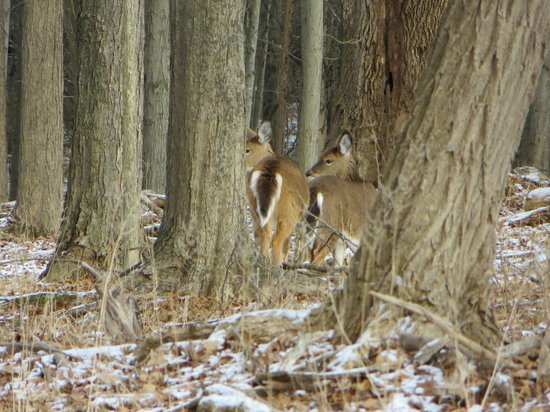 Minnewaska State Park Preserve: deers blending in with the trees