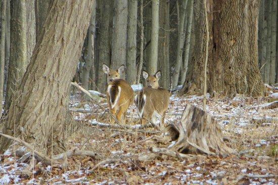 Minnewaska State Park Preserve: deers staring at me