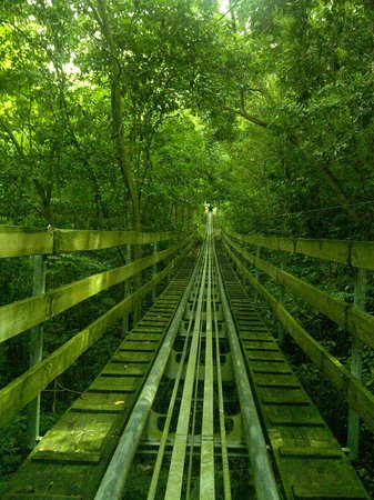 Rainforest Adventures Jamaica: The way back up the bobsled