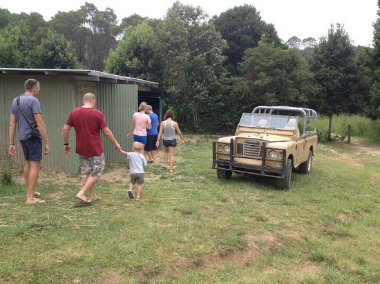 Hosanna Farmstay : The chook shed & venerable farm truck