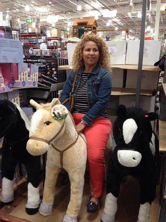 Cranky Cafe: horse riding