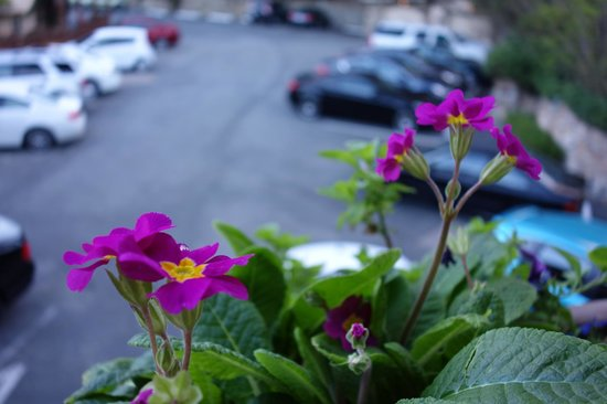Tickle Pink Inn: Car park