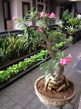 Tanjung Sari Inn: Nice garden
