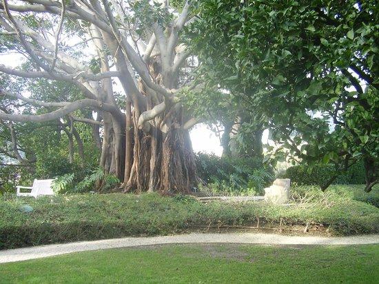 Vista picture of villa jardins ephrussi de rothschild for Villa jardins ephrussi de rothschild