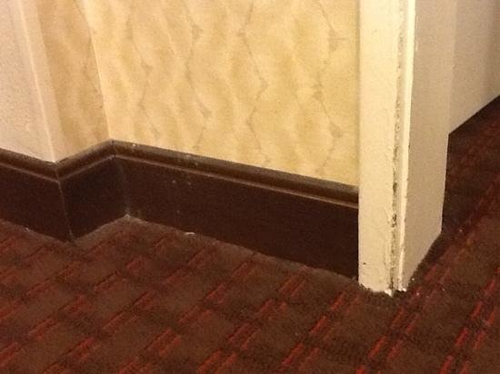 Embassy Suites by Hilton Flagstaff: dirty and worn carpet and walls