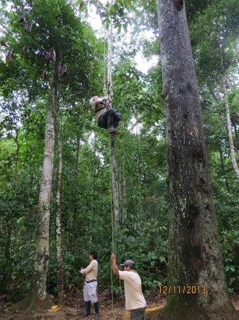 Refugio Amazonas: Canopy climbing...