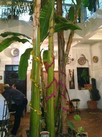 Riad Abaca Badra: Pour le réveillon, un bananier et un palmier de Noël (ça change du sapin...)