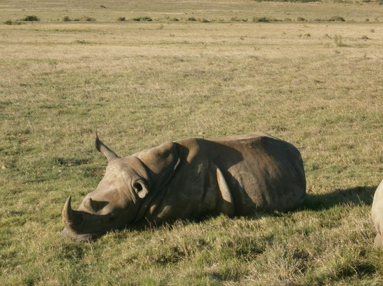 Garden Route Game Lodge : white rhino sighting
