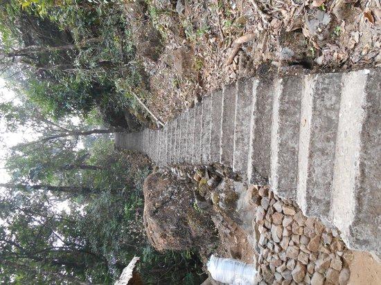 """Double Decker Living Root Bridge : """"Stair trek"""""""