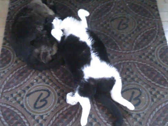 Binion's Gambling Hall : English cats enjoying a piece of old Vegas