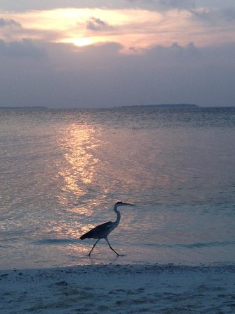 Makunudu Island: coucher de soleil bungalow 18