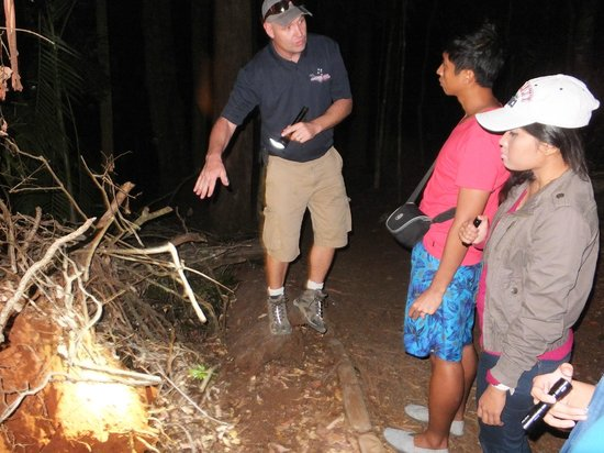 Southern Cross 4WD Tours: along the rainforest