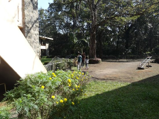 KTDC Periyar House : Greenery and play area