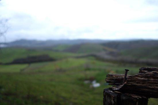 Fattoria Lischeto: Panorama