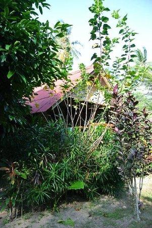 Coconut Corner Bungalows: vue du bungalow