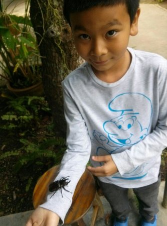 Siam Insect Zoo: Having fun with a beetle