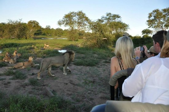 Pondoro Game Lodge: So close to the King...