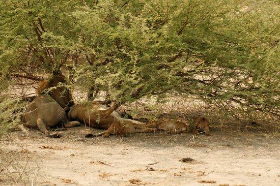 Savute reserve