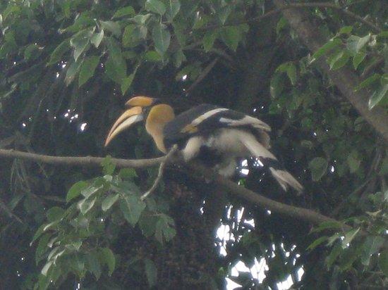 The Amba Resort : Hornbill