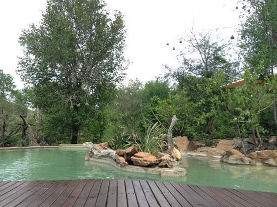 Impodimo Game Lodge: pool