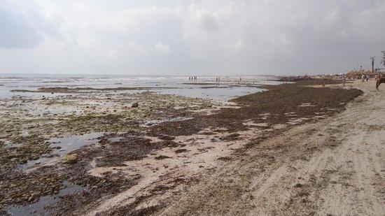 Club Diana Rimel Djerba: Stones and dirt everywhere