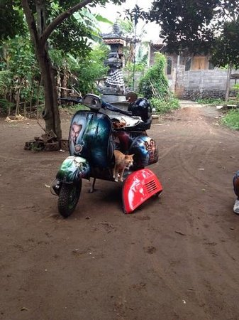 Bali Vespa Tour - Day Tours: house-cat is watching the vespa being fixed
