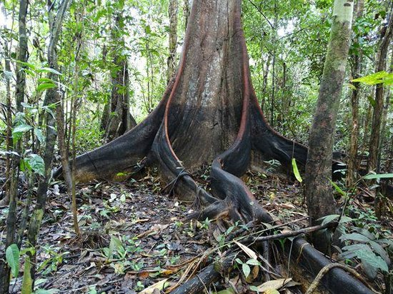 Ivy Mara Ey Lodge: Wasserstand nach Regenzeit auf Baum ersichtlich