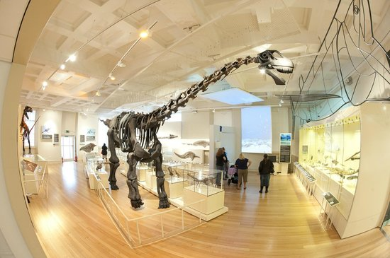 New Walk Museum and Art Gallery : The Dinosaur Gallery