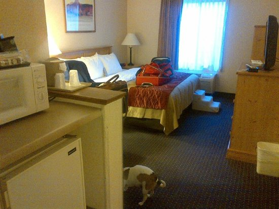 Santa Fe Comfort Inn: king bed with microwave and fridge