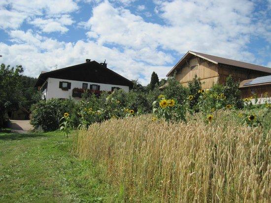 Haflingerhof