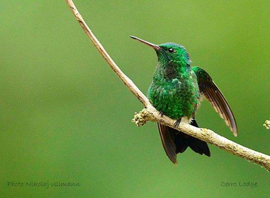 Hotel Cerro Lodge : Hummingbird