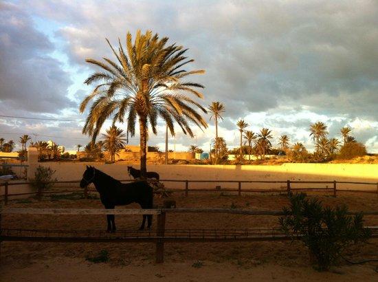 Royal Carriage Club Riding School: ranch