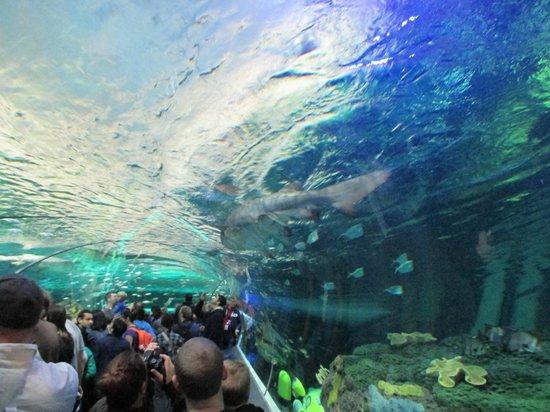 Picture of Ripley's Aquarium of Canada, Toronto - Tripadvisor