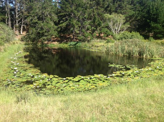 Kwelanga Country Retreat: Lillies on the lake