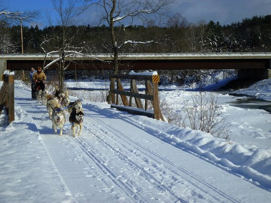 Vermontology Guided Day Tours: Vermontology customers going dog sledding- Vermont Tours