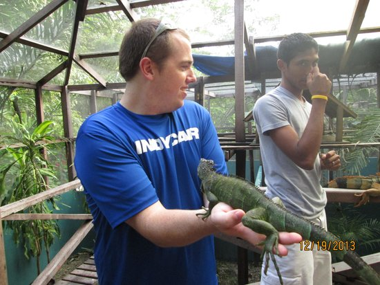 Green Iguana Conservation Project : holding iguana