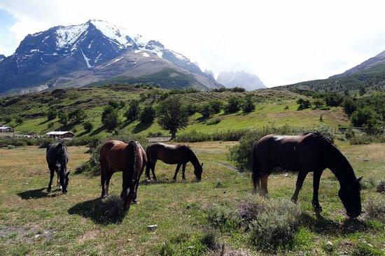 Torres del Paine National Park: In front of Refugio Torre central