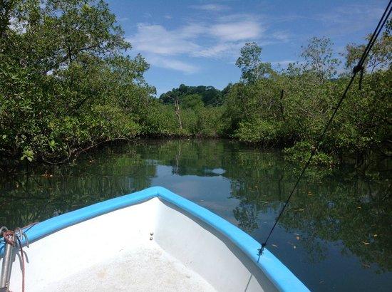 Esquinas Rainforest Lodge: Ausflug in die Mangroven im Golfo Dulce