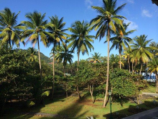 Rosalie Bay Resort: Uitzicht op de mooie, ruim opgezette tuin